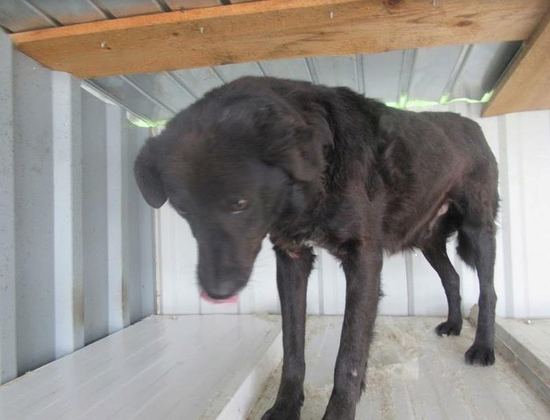 DIEGO - mâle croisé de taille moyenne, né en 2010 - REMEMBER ME LAND -  décédé Diego110