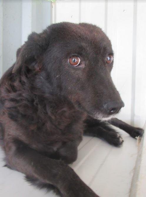 DIEGO - mâle croisé de taille moyenne, né en 2010 - REMEMBER ME LAND -  décédé Diego510