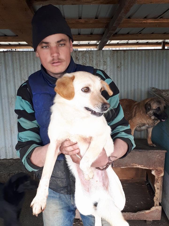 FEELING - femelle croisée labrador taille petite à moyenne née environ avril 2015 - REMEMBER ME LAND - Adoptée par Magali (68) - Page 2 Feelin11