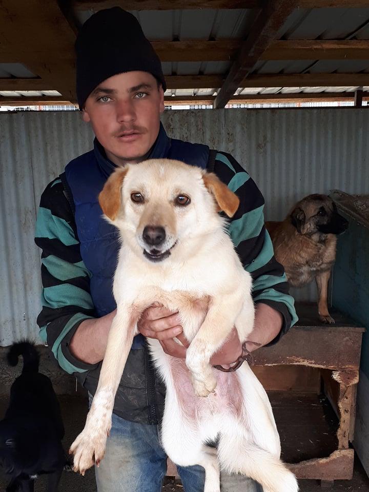 FEELING - femelle croisée labrador taille petite à moyenne née environ avril 2015 - REMEMBER ME LAND - Adoptée par Magali (68) - Page 2 Feelin12
