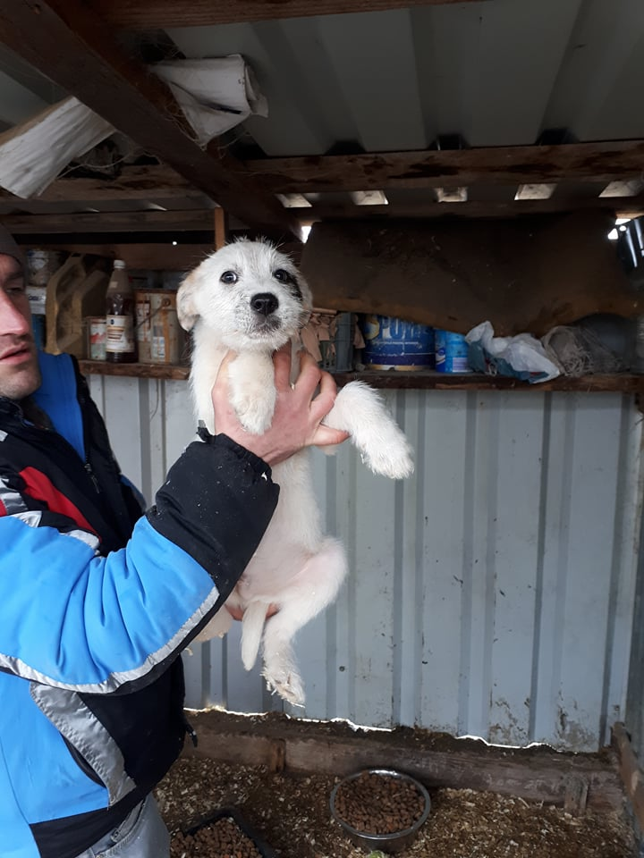 NARCO (ex GAMIN) - chiot mâle, croisé taille moyenne adulte né environ septembre 2017 - REMEMBER ME LAND, Adoptée par Michelle (département 57) Gamin11