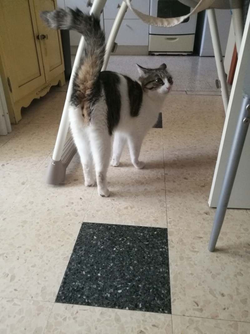 CACAHUETE, chaton mâle né env août 2014 - adopté par Zab's (10) - Page 2 Img_2030