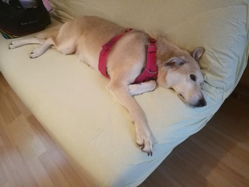 DIANA - femelle Labrador x Retriever de grande taille, née environ février 2010 (Camelia)- adoptée par Béatrice (54)  - Page 3 Img_2065