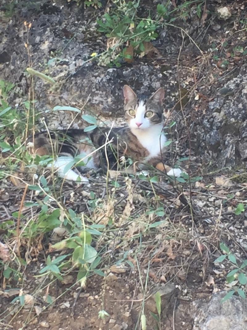 PEPITO, chaton mâle, né environ en mars 2018 - Pascani - adopté par Vanessa(83) Img_2310