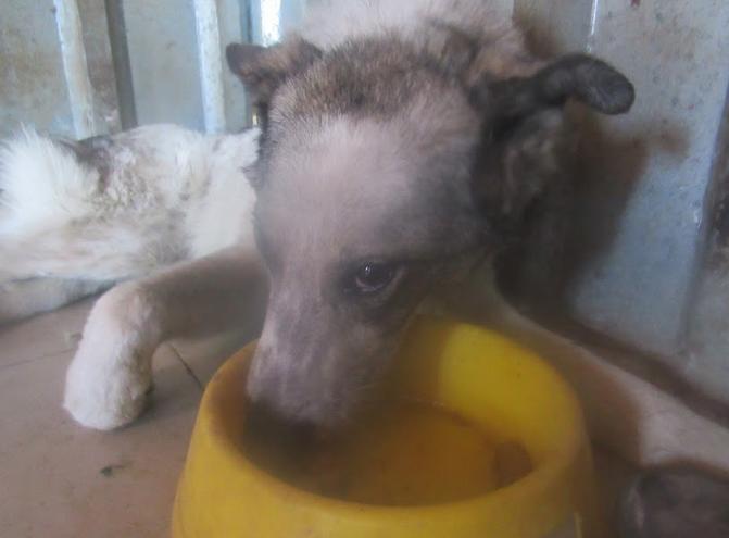 URGENCE pour LAGOON - femelle croisée de taille moyenne, accidentée, née en 2012. Douce (PASCANI) - REMEMBER ME LAND - décédée Lagoon23