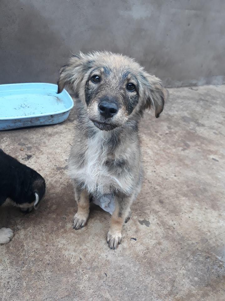 AMEH (LEONA) - femelle croisée chien loup/berger de taille moyenne adulte, née environ mars 2018- adoptée par Émilie et Benjamin (06) Leona11