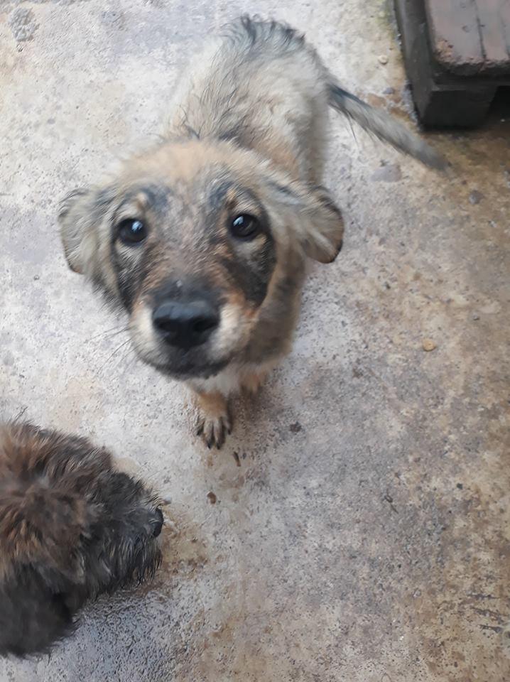AMEH (LEONA) - femelle croisée chien loup/berger de taille moyenne adulte, née environ mars 2018- adoptée par Émilie et Benjamin (06) Leona110