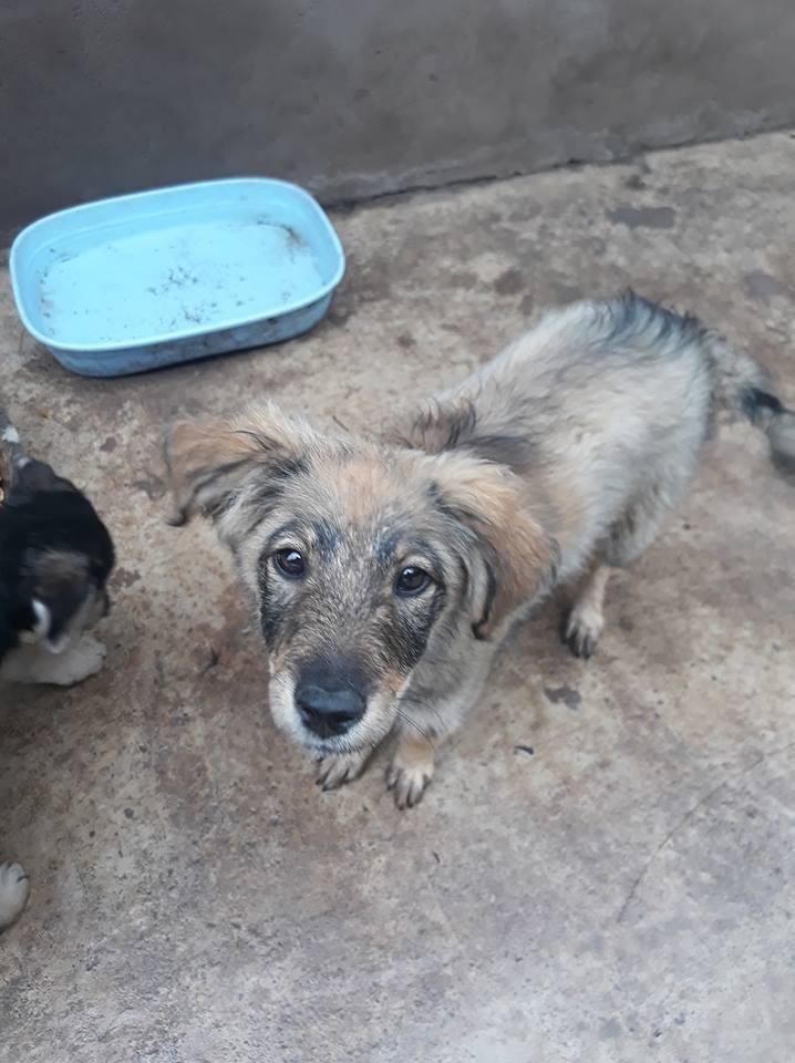 AMEH (LEONA) - femelle croisée chien loup/berger de taille moyenne adulte, née environ mars 2018- adoptée par Émilie et Benjamin (06) Leona210