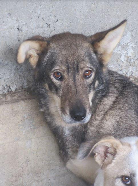 LUPI !! + de 3 ans de box !! - femelle , née environ en 2010, typée chien loup de sarloos, taille moyenne - REMEMBER ME LAND - Page 2 Lupi310