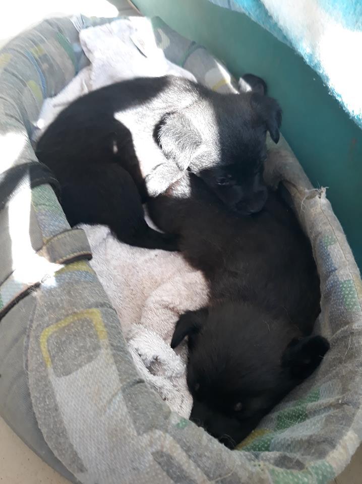PRIM (ex NINI) - adorable petite femelle née en mai 2018 - REMEMBER ME LAND - Adoptée par Caroline (59) Nini_n10