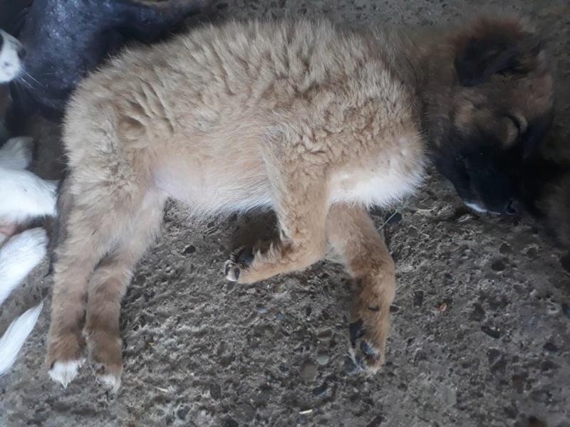 ARYA (ex OURSE) - chiot femelle croisée taille moyenne adulte née env mai 2018  REMEMBER ME LAND - Adoptée par Antonietta (Belgique) Ourse10
