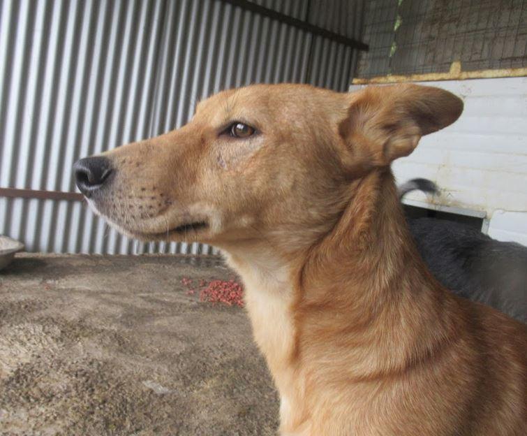 PEDRO - mâle croisé de taille moyenne, né en 2013 - REMEMBER ME LAND Pedro610