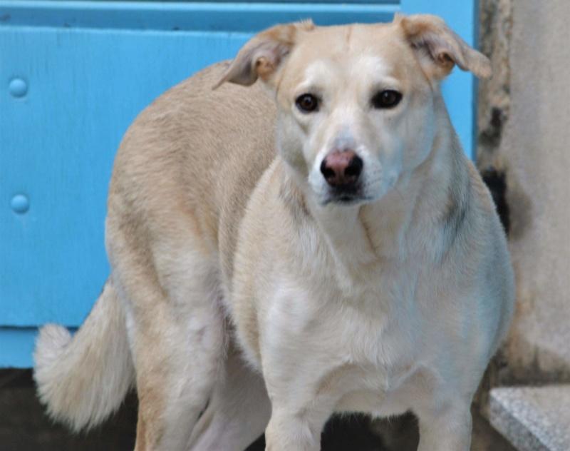 DIANA - femelle Labrador x Retriever de grande taille, née environ février 2010 (Camelia)- adoptée par Béatrice (54)  - Page 3 Receiv65