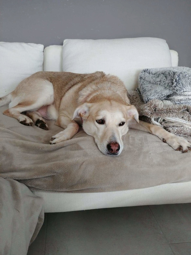 DIANA - femelle Labrador x Retriever de grande taille, née environ février 2010 (Camelia)- adoptée par Béatrice (54)  - Page 3 Receiv72