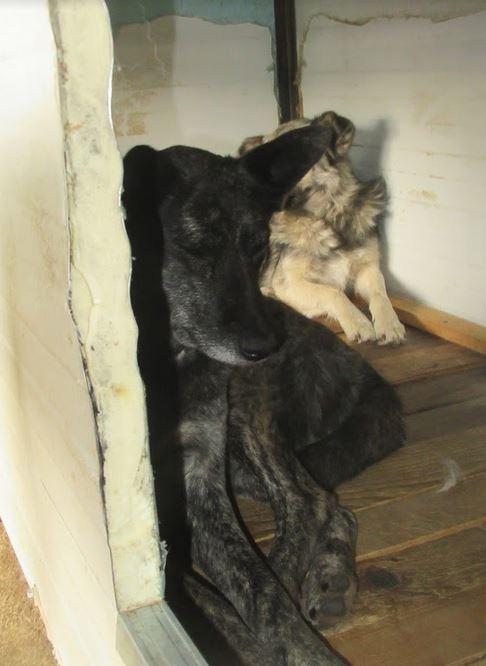 TIGRETTE - femelle croisée de taille moyenne, née en 2009 ( PASCANI) - REMEMBER ME LAND Tigret11