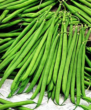 Le brillant amas du haricot vert, vous connaissez ? 10224-10