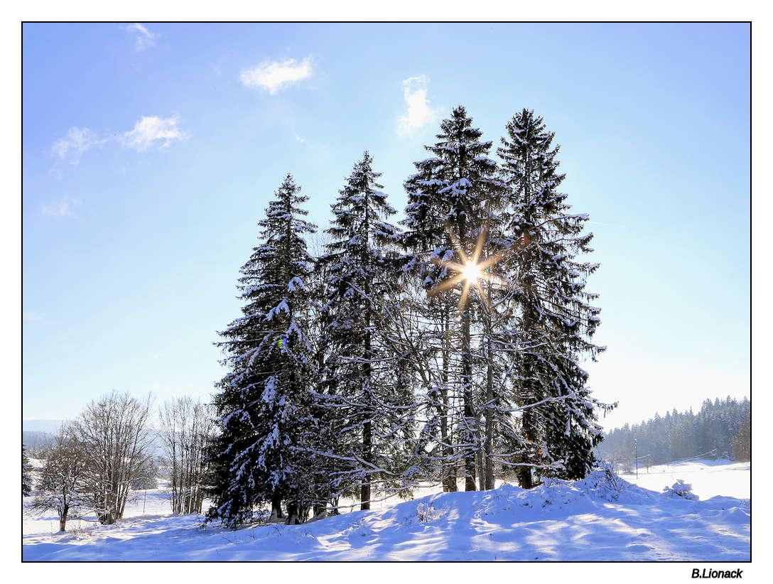 Sun and snow Arbres10
