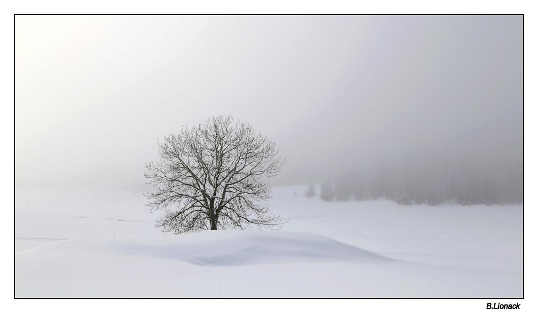 Brume de neige Brume10