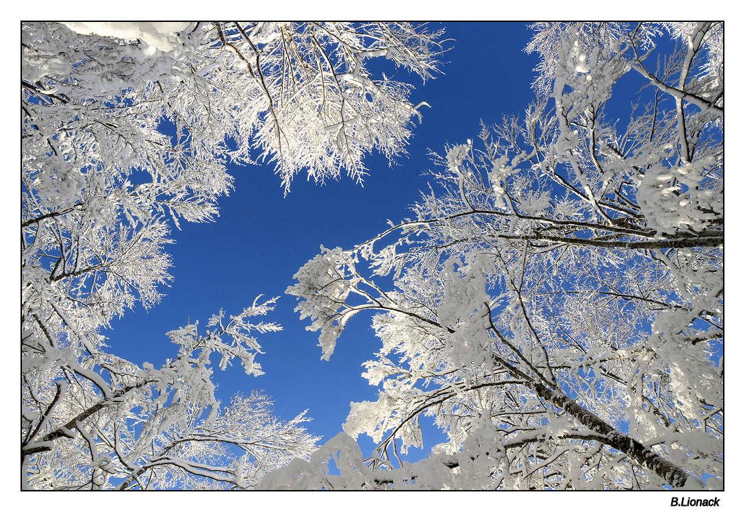 Le nez en l'air Ice0110