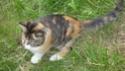 Notre petit chat et nos hamsters Dsc02010