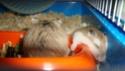 Notre petit chat et nos hamsters Dsc02110