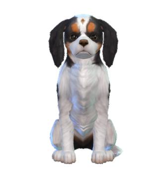 Les Sims 4 Chiens et Chats - 10 Novembre 2017 - Page 2 Simsca13