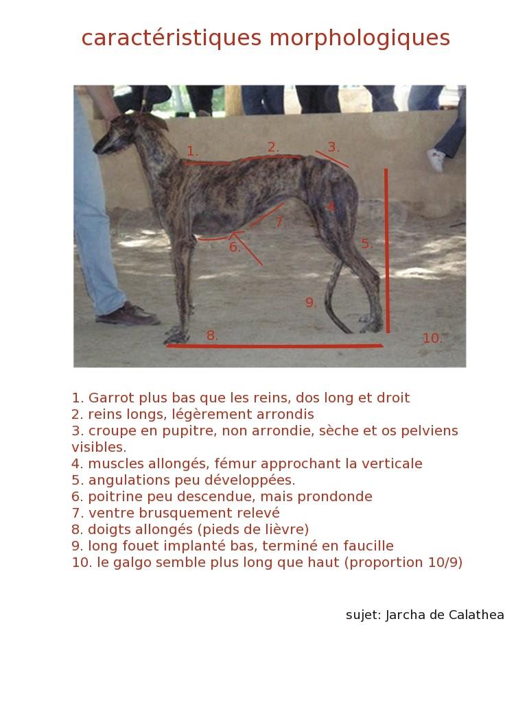 illustrations caractéristiques morphologiques importantes Caract10