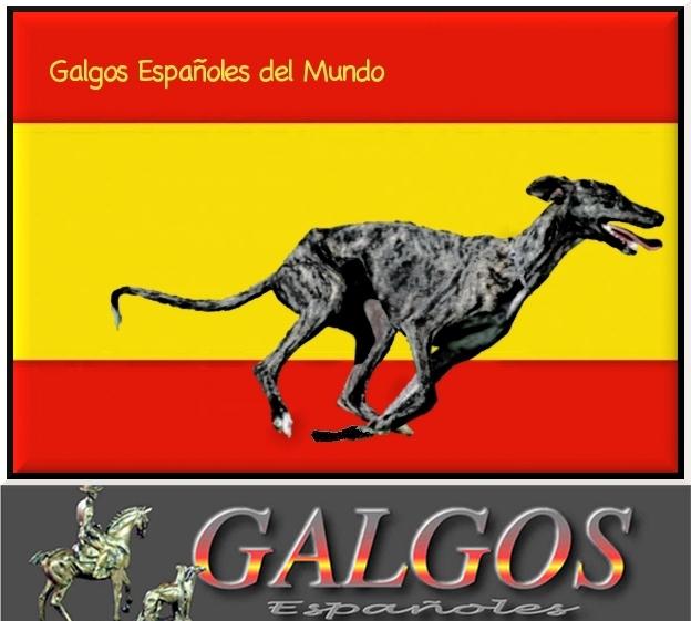 Galgos Españoles del Mundo