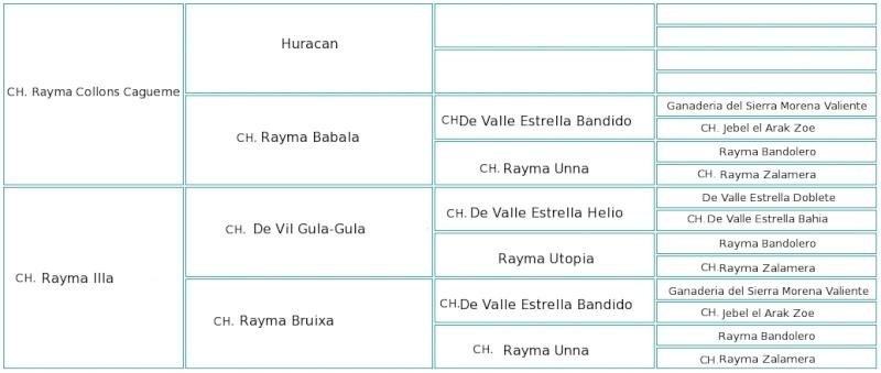 "Rayma Dissabte ""Mate"" Pedigr13"