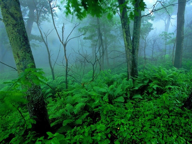 Shika's blade of mist Forest10