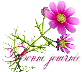Bonjour/bonsoir de fevrier - Page 2 98536512