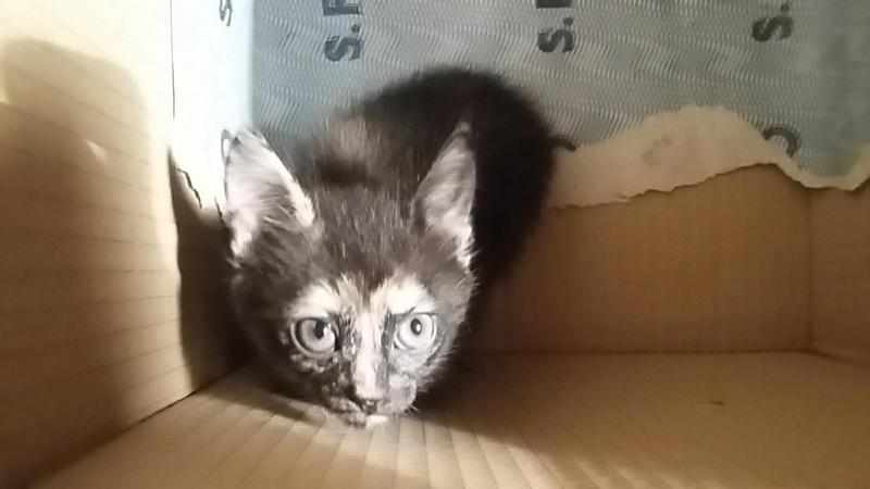 TAMARIS née le 12 mars 2018 Cel210