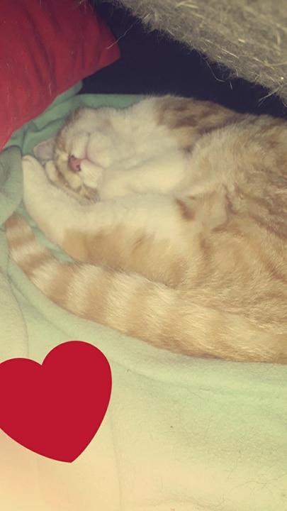 Tigrou,(blanc et roux) né en avril 2017 Tigrou12