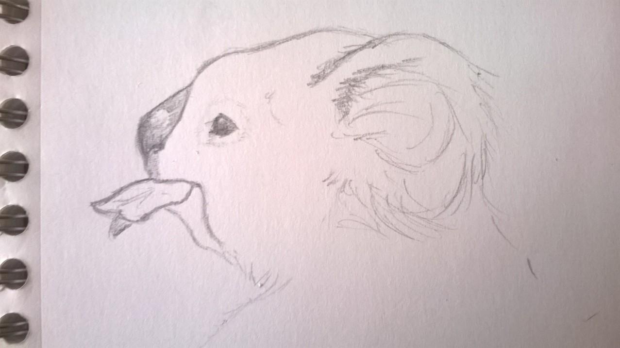 Gribouille gribouille Wp_20112