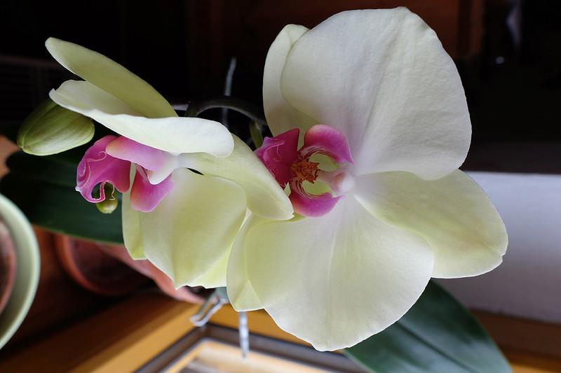 Orchideen 3 (fortlaufende Seiten 300 bis 400) - Seite 6 18_01_12
