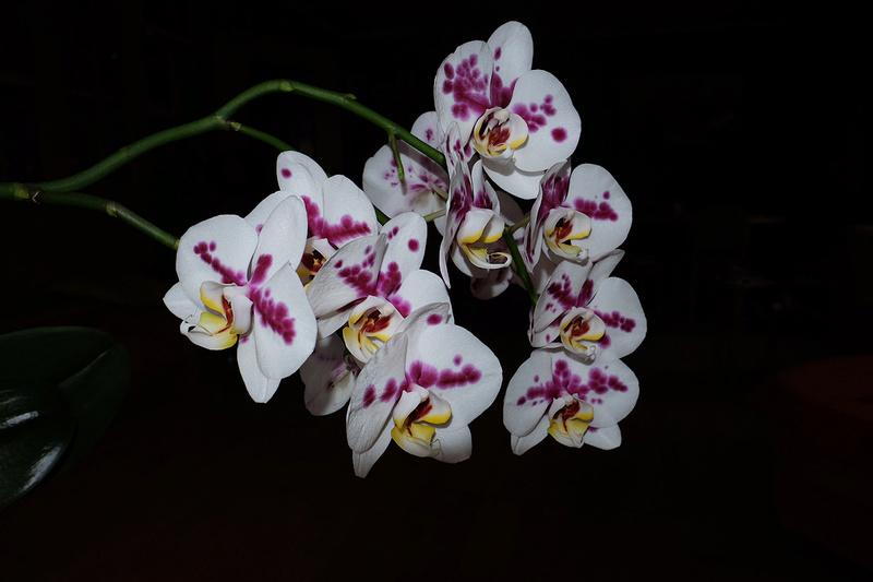 Orchideen 3 (fortlaufende Seiten 300 bis 400) - Seite 6 18_01_13