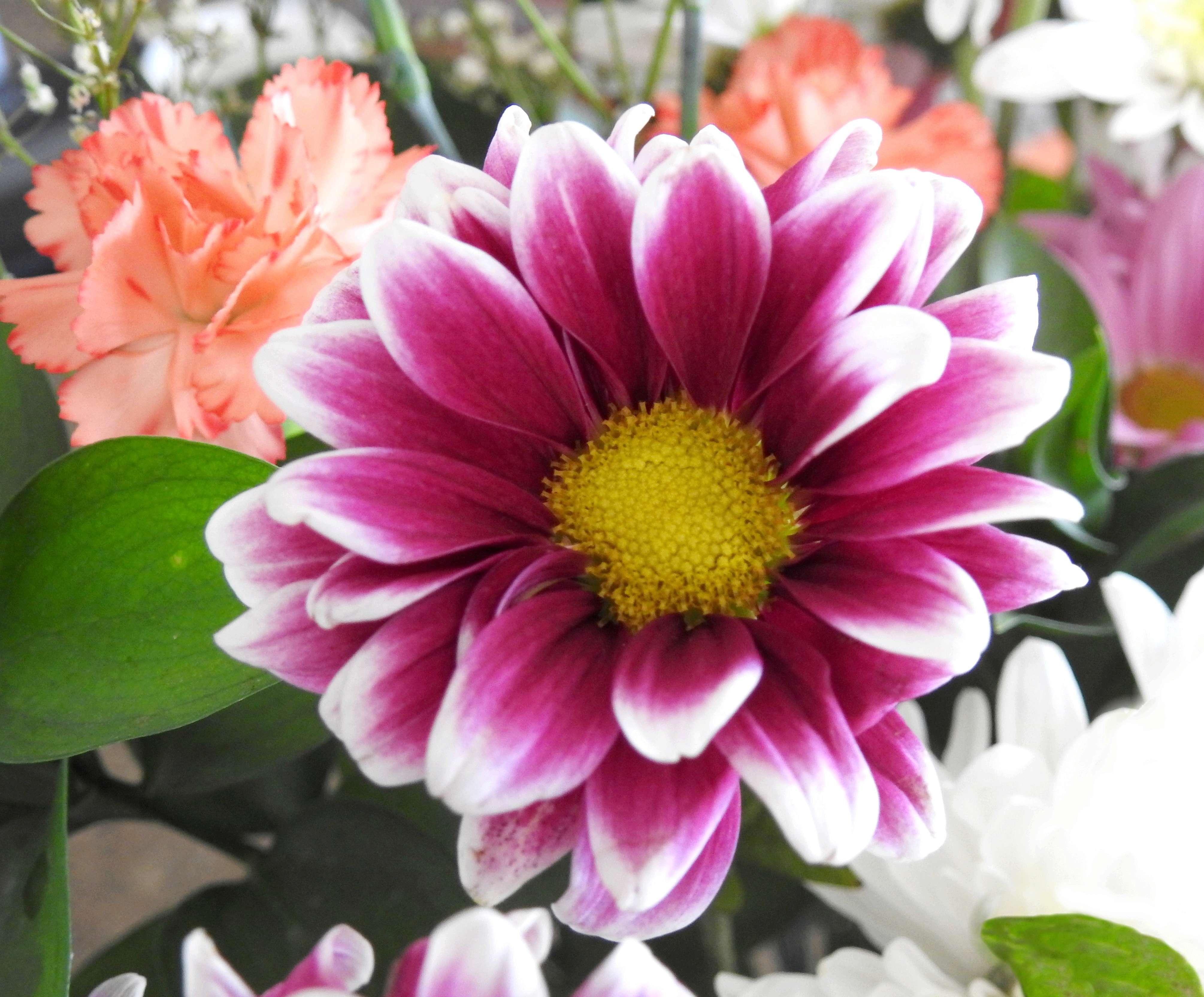 [Fil Ouvert] Fleurs - Page 21 2018-071