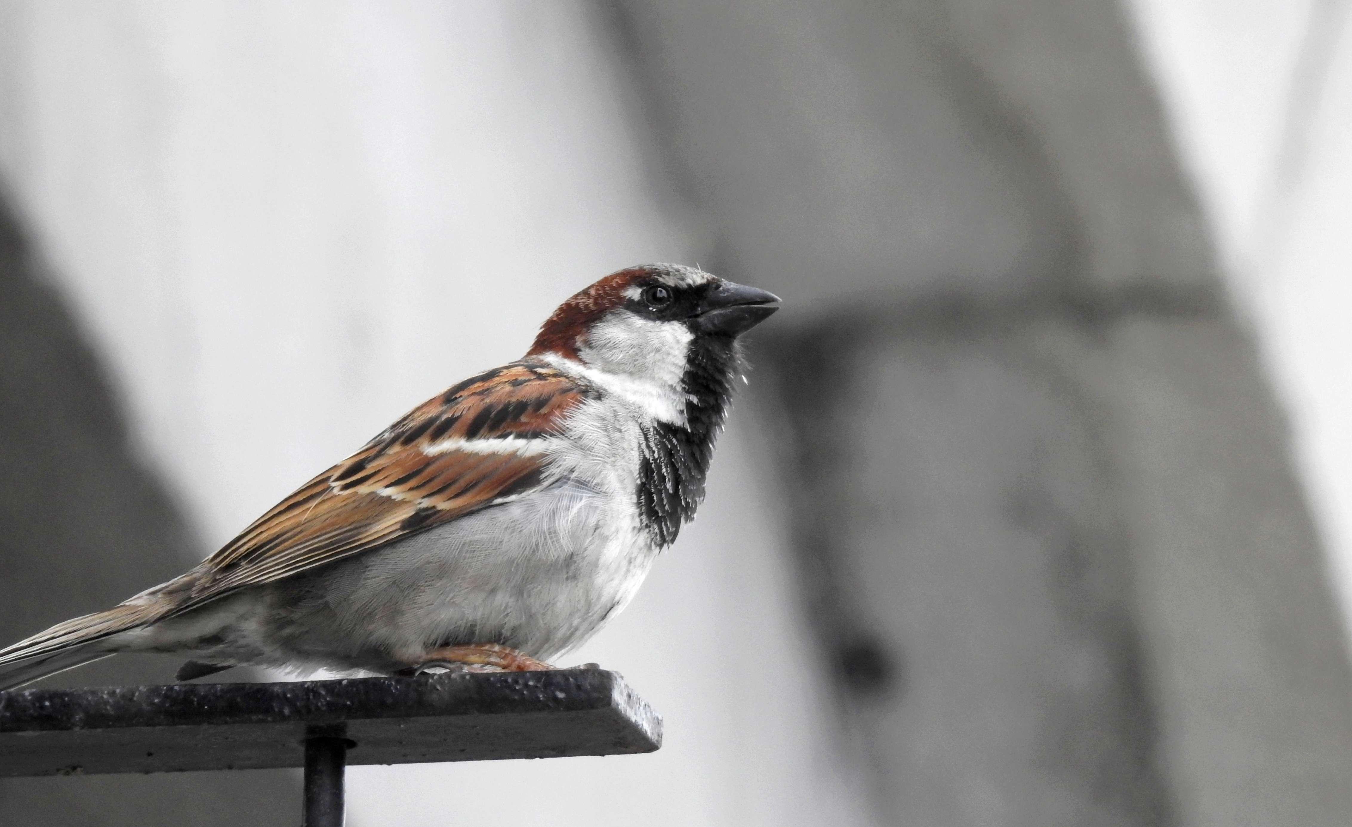 [Ouvert] FIL - Oiseaux. - Page 14 2018-079