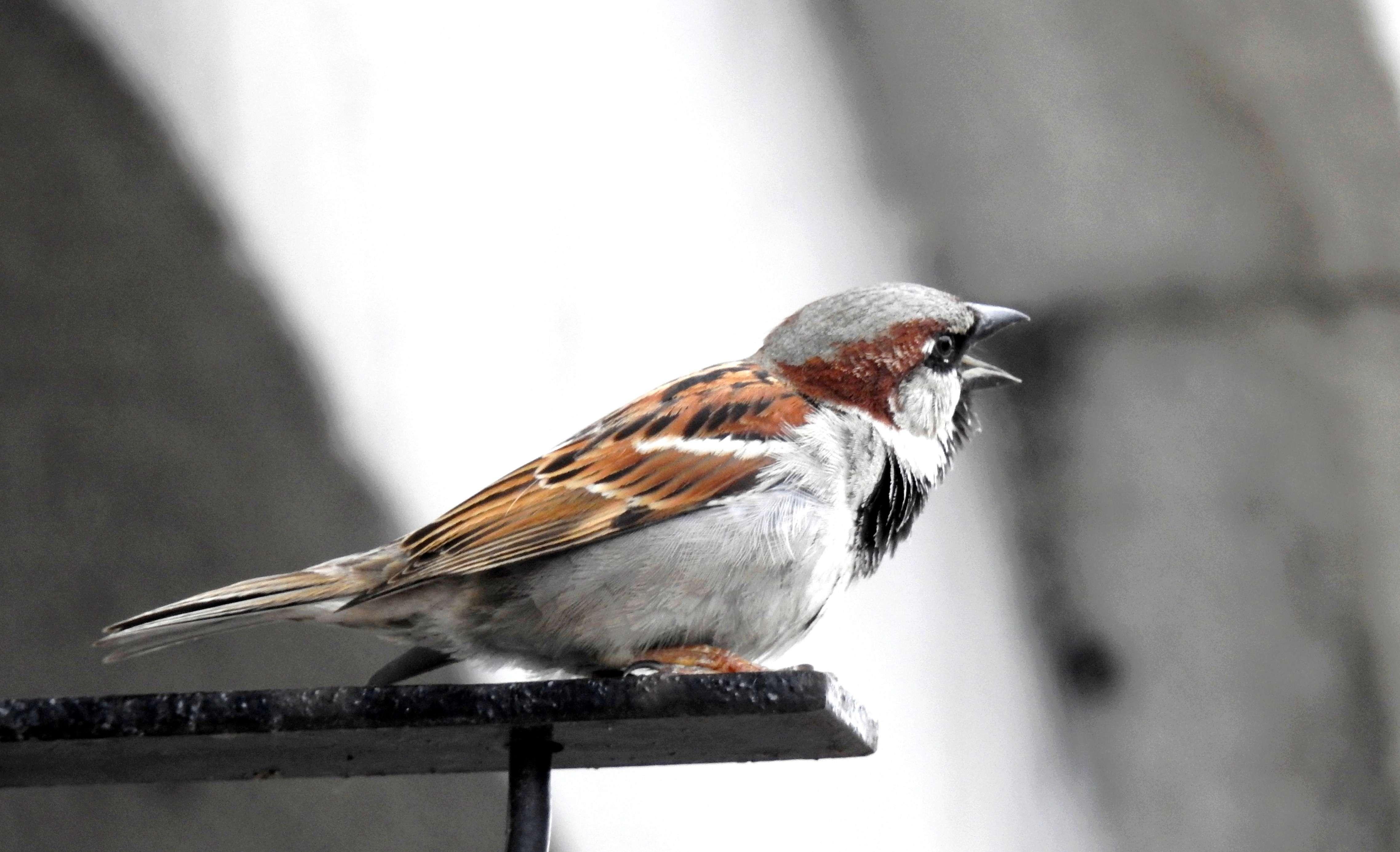 [Ouvert] FIL - Oiseaux. - Page 14 2018-080