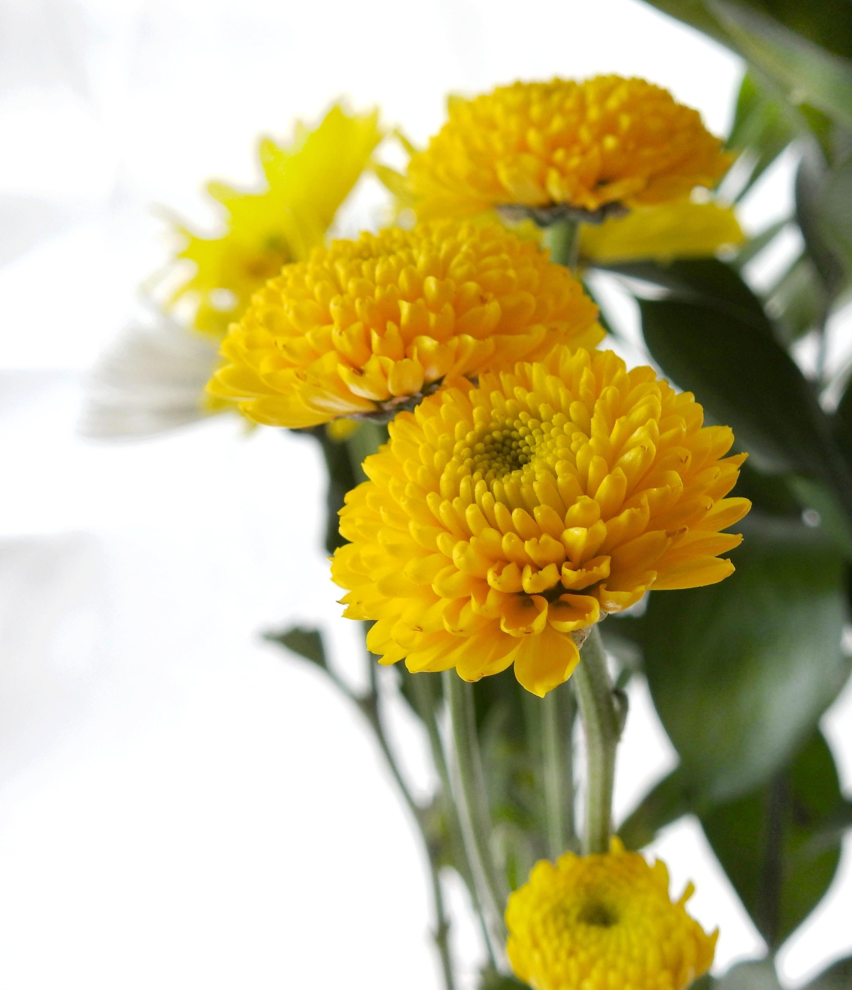 [Fil Ouvert] Fleurs - Page 21 R2018-10
