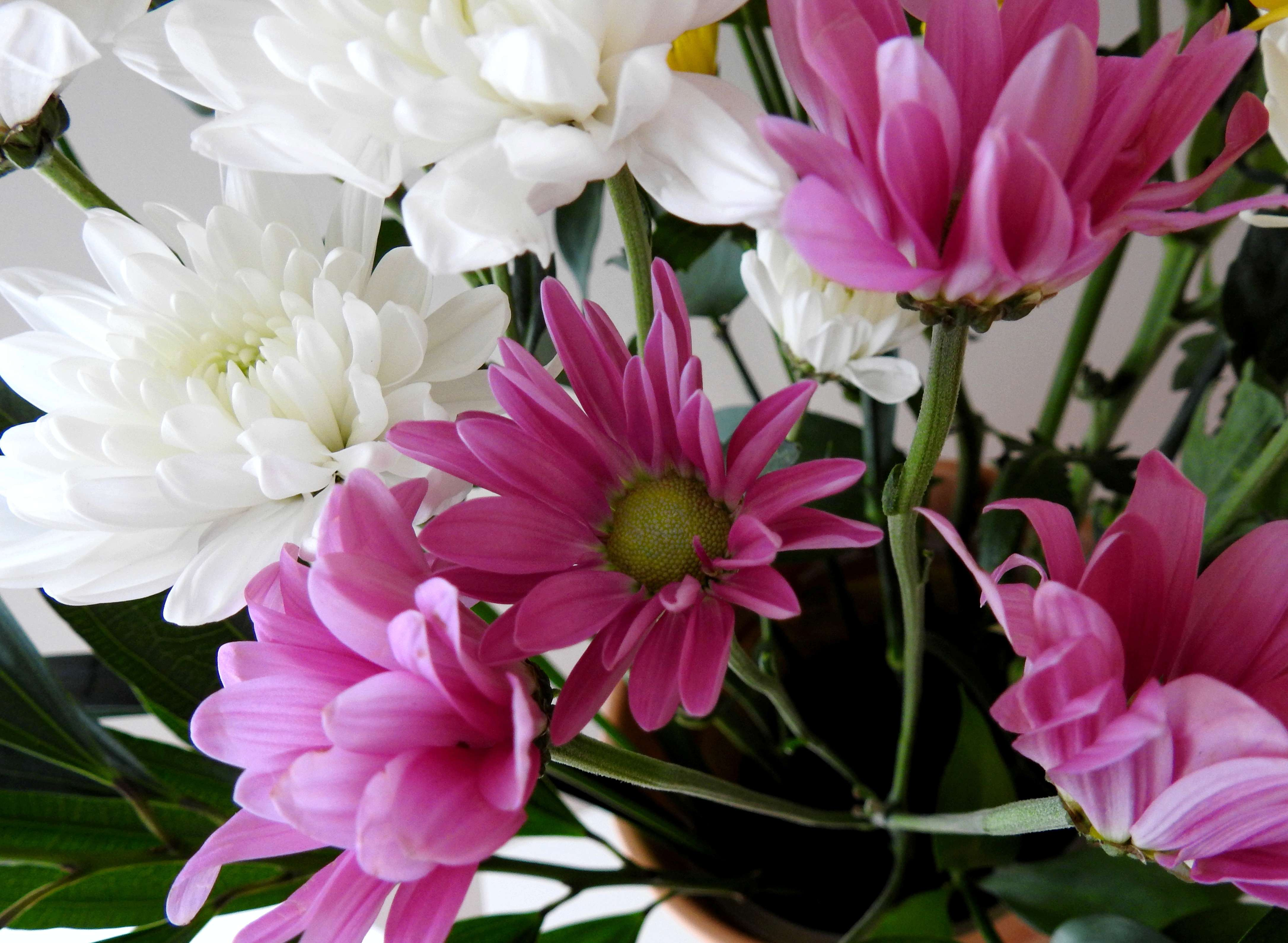 [Fil Ouvert] Fleurs - Page 21 R2018-11
