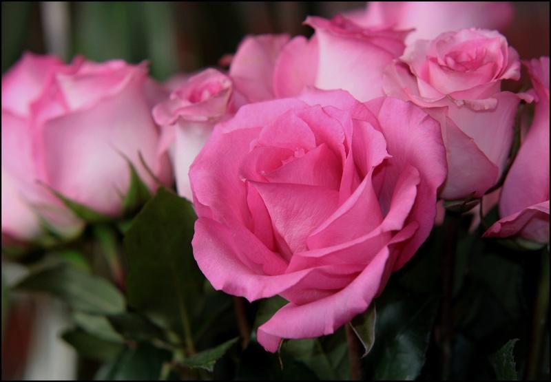 Absence  Rose_b10