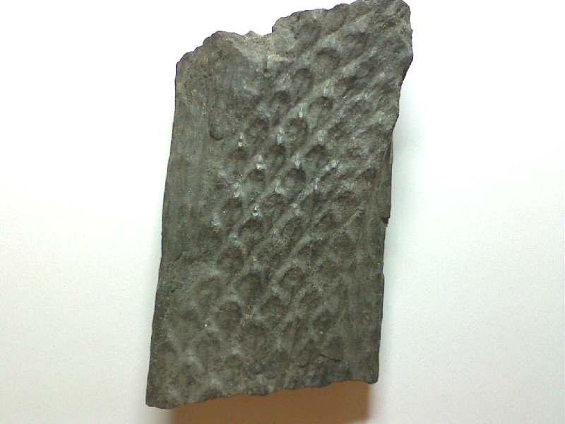 Quelque photos de mon carbonifère Pictur17