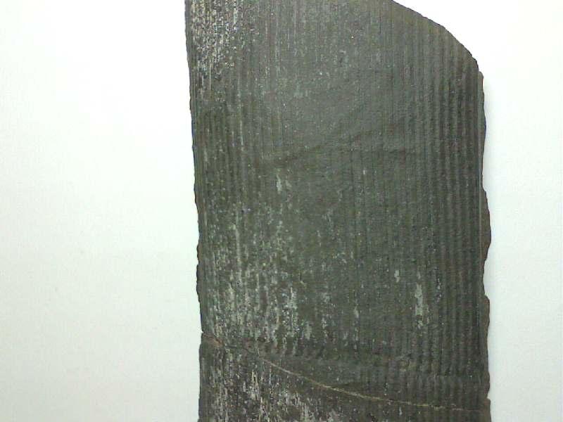 Quelque photos de mon carbonifère Pictur18