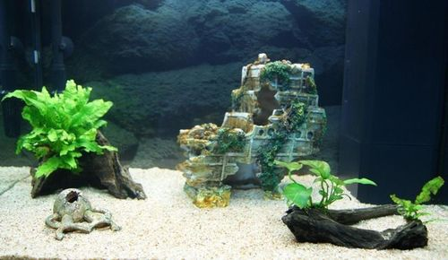 """Mon aquarium Juwel """" Lido 120 """" - Page 2 L_aqua20"""