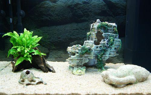 """Mon aquarium Juwel """" Lido 120 """" L_aqua22"""