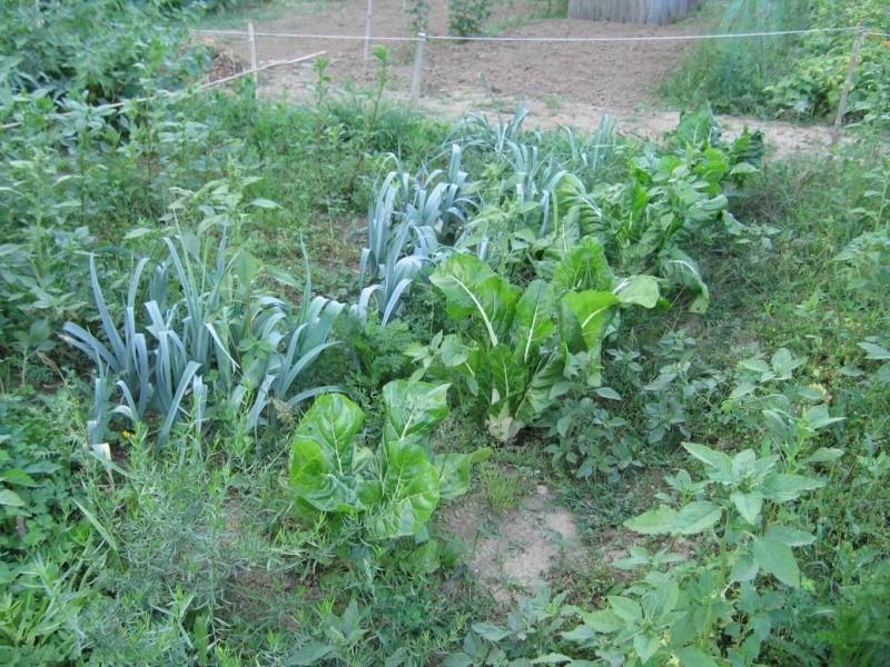 Trouver et faire un jardin Autre_10
