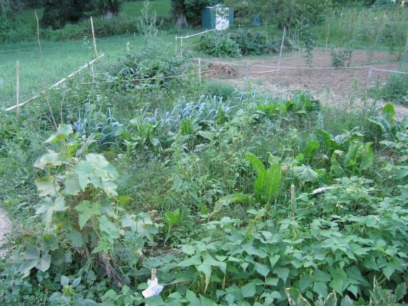 Trouver et faire un jardin Partie10