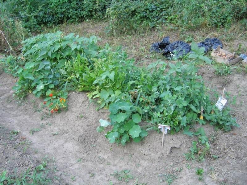 Trouver et faire un jardin Vue_du10