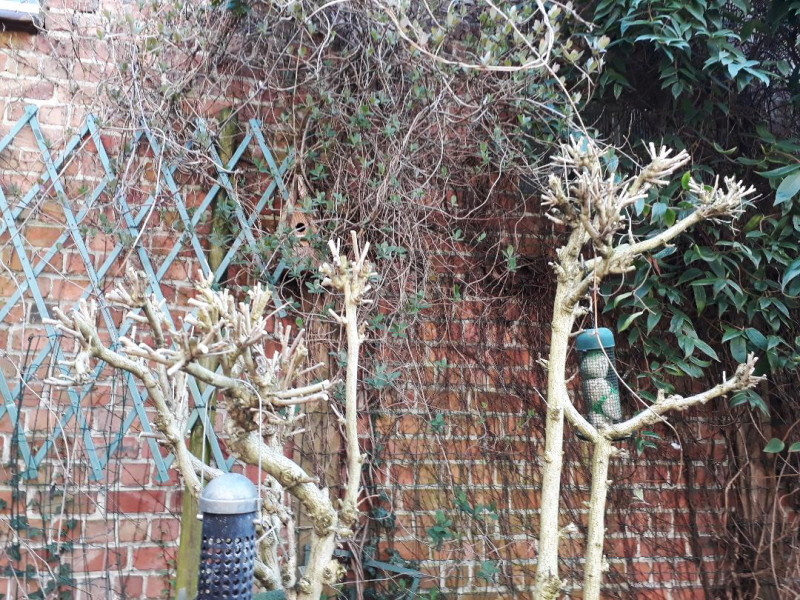 Le jardin de Ninie !!! Hibisc11